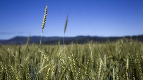 GrainCorp may be purchased by Archer Daniel Midland. Photo: Natalie Behring