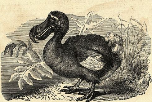 undated_engraving_of_dodo11508941